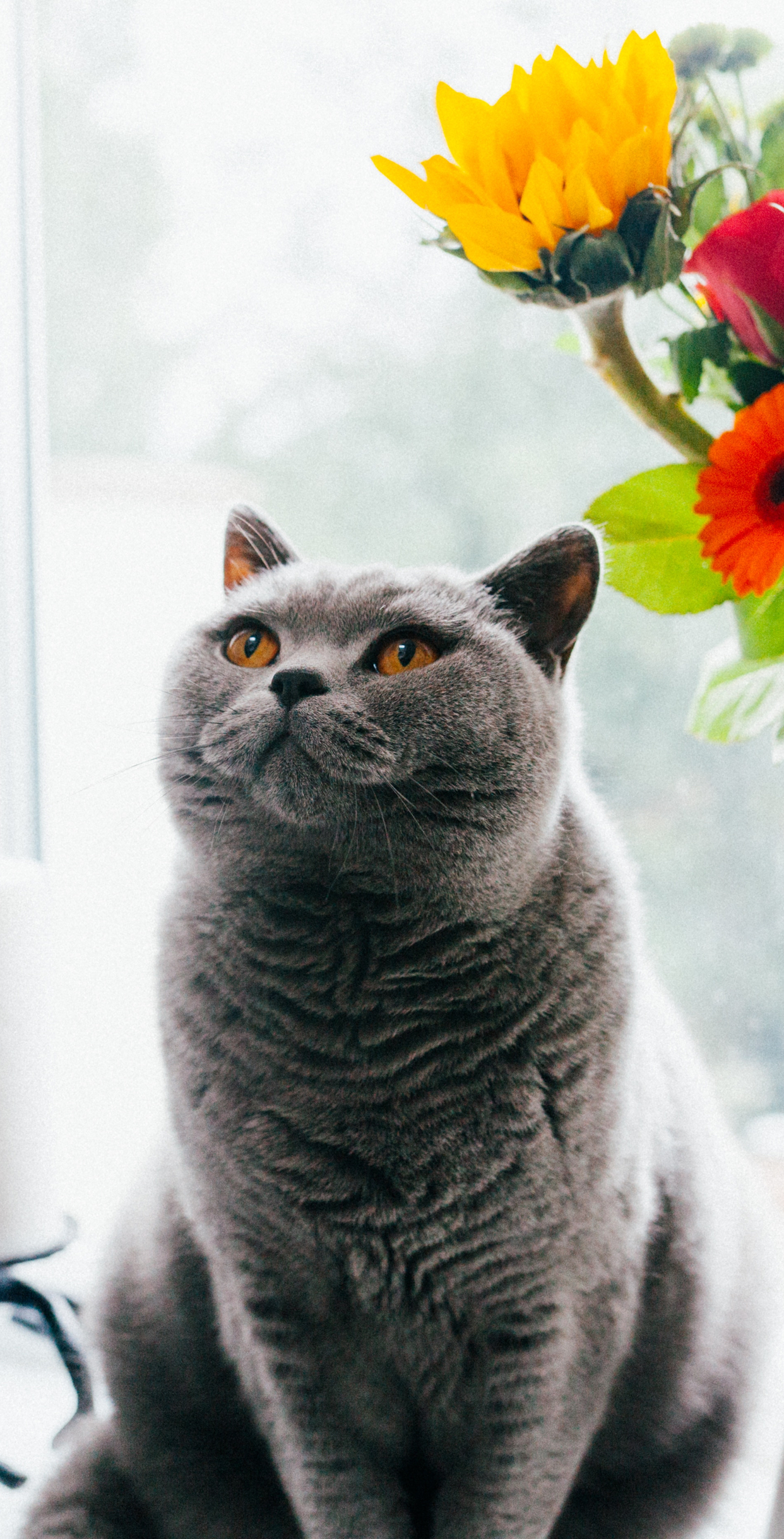 Cute Cat Wallpapers Hd For Mobile Phone I Like Cats Very Much