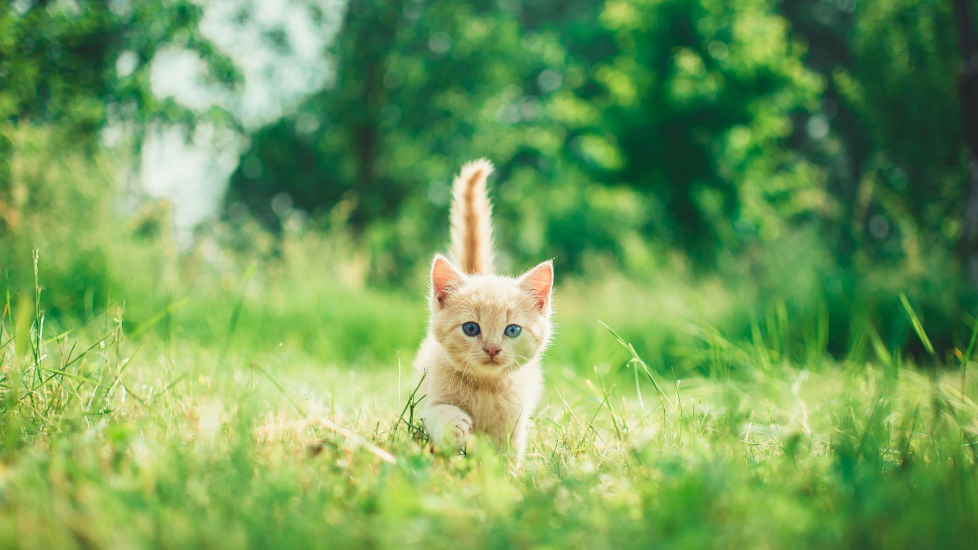 Cats Wallpapers Desktop - Amazing Happy Kitten