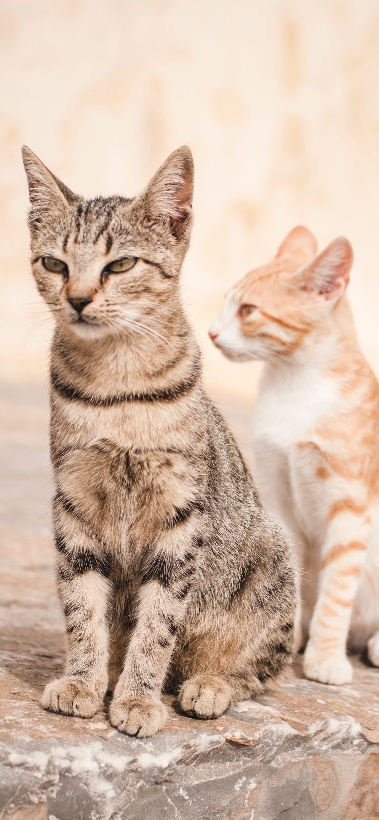 Cute Cat Wallpaper iPhone Backgrounds - Cat T-Shirt Store