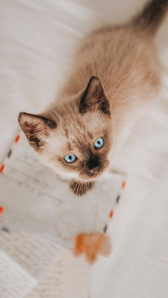 50+ of Unique Cat Names For Girls And Boys - I Like Cats