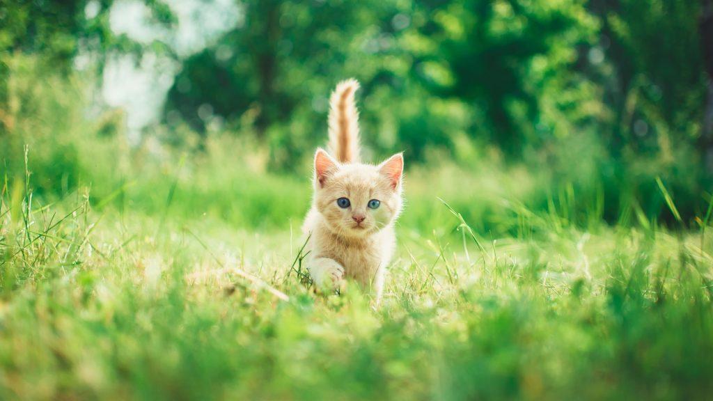 Beautiful young kitten
