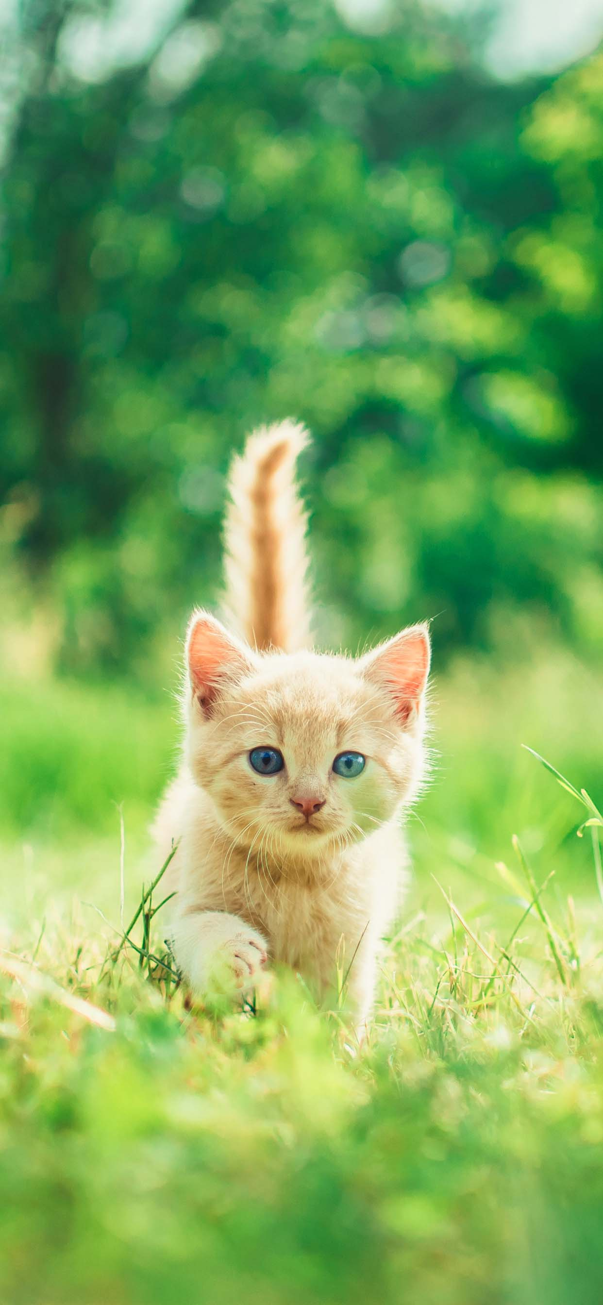 Cat wallpapers for iPhone XS Max - Lively happy kitten exploring the world