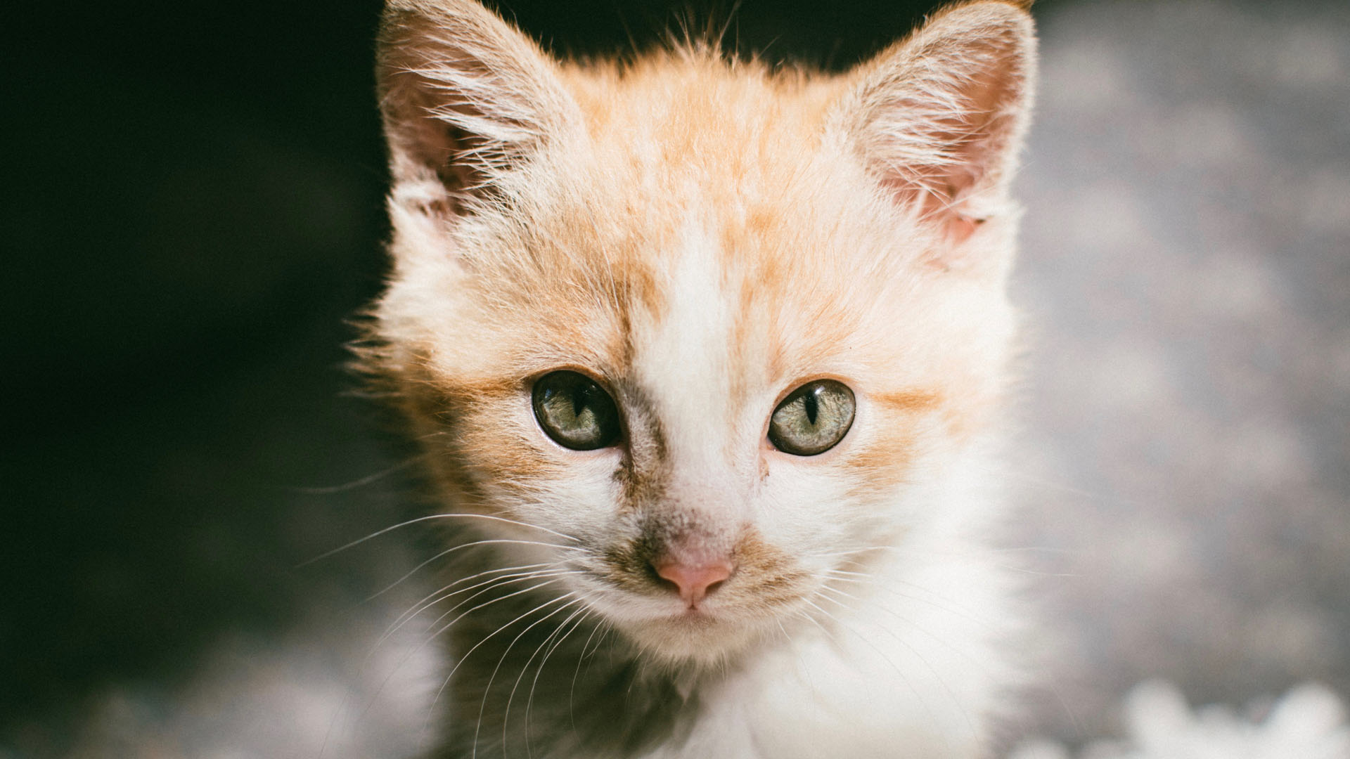 Beautiful Orange Kitten with Greenish Eyes Desktop Wallpaper 4K