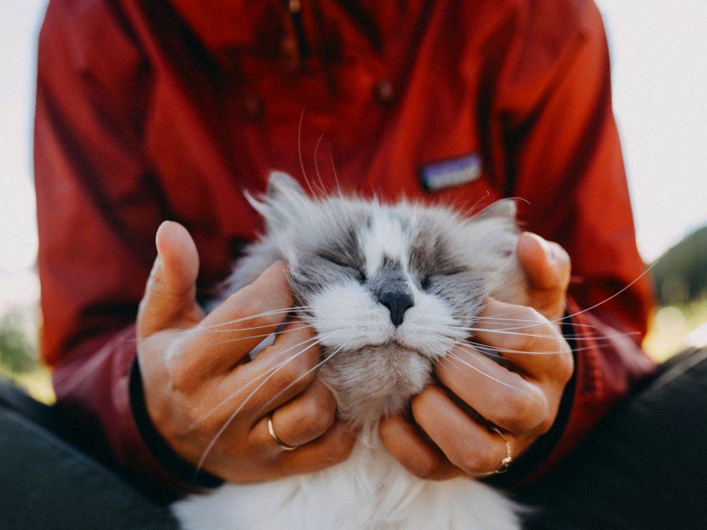 10 Most popular cat breeds
