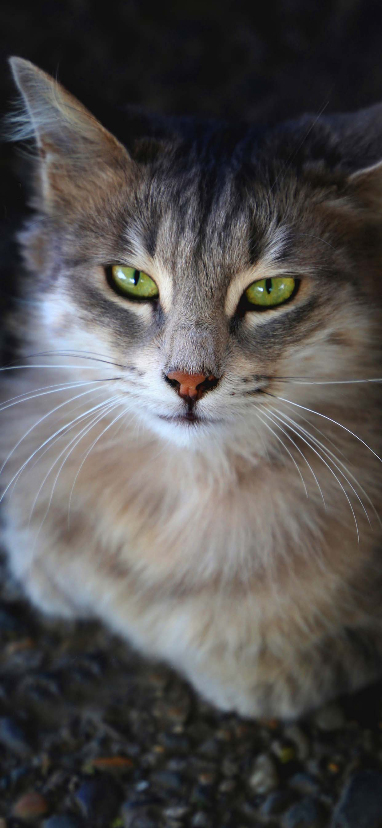 Amazing Cat With Green Eyes - Wallpaper For iPhone