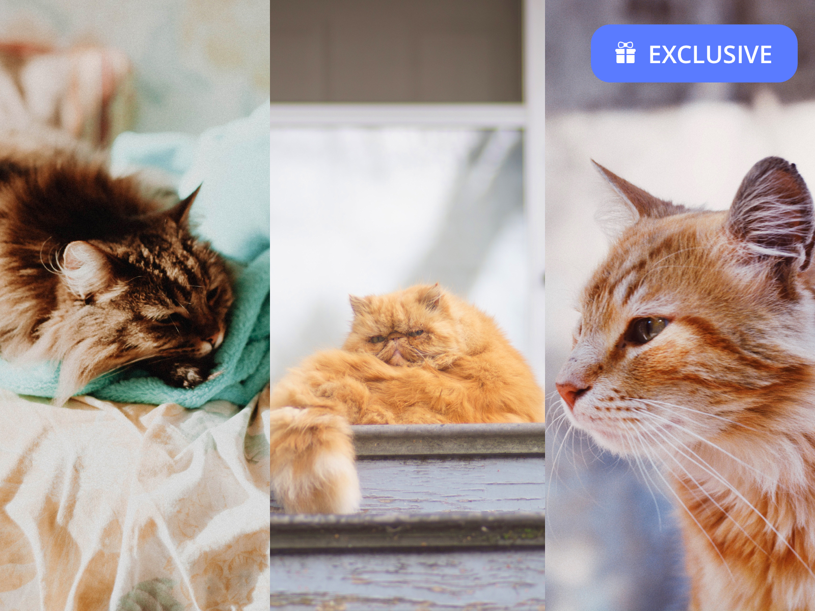 Cute Cat Wallpapers For iPhone XR