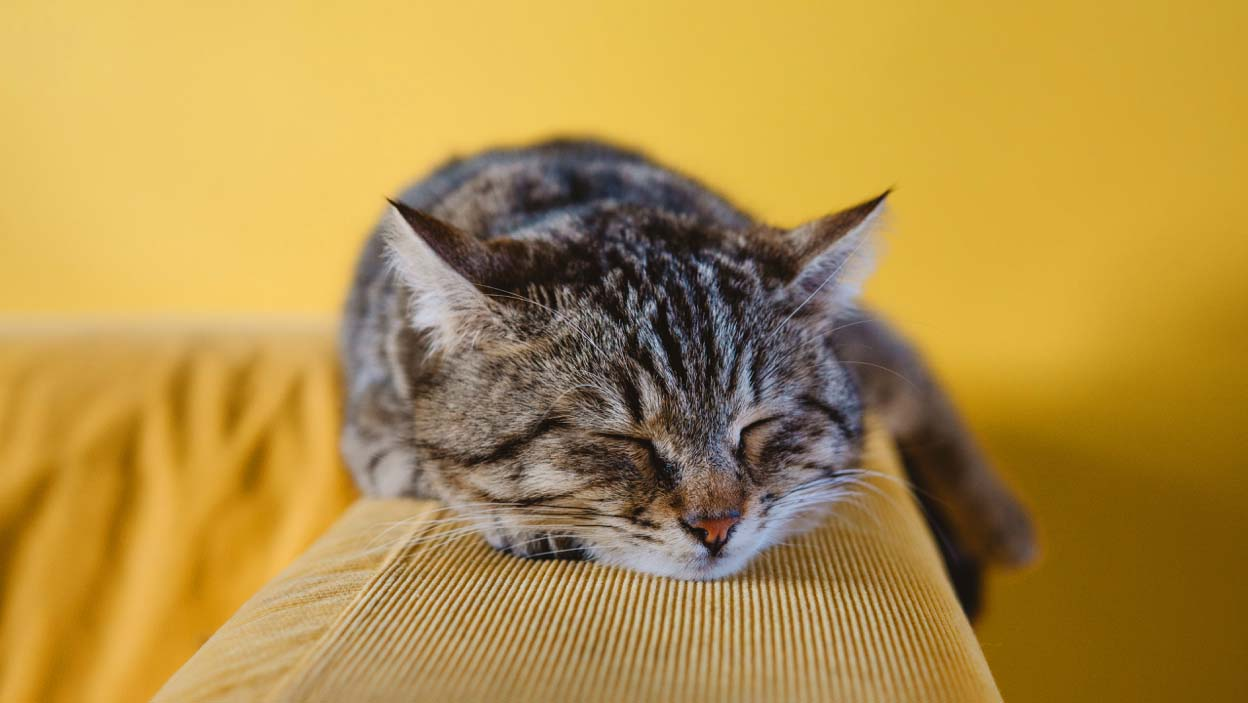 Awesome Cute Sleeping Cat Wallpaper