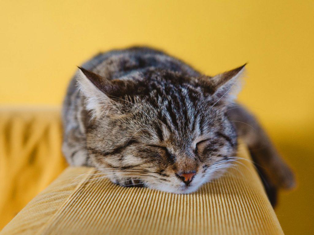 iMac 5K Cat Wallpapers
