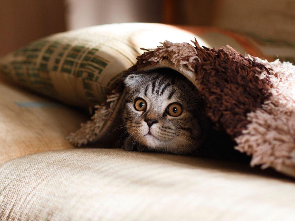 Cat Quiz For Cat Lovers - Funny Cat
