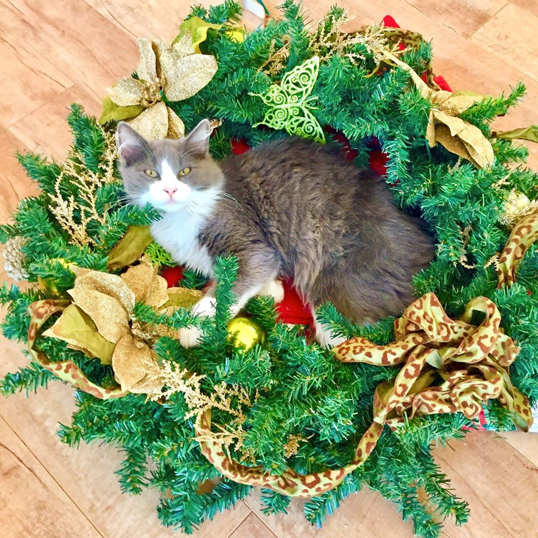 Cat and Christmas wreath
