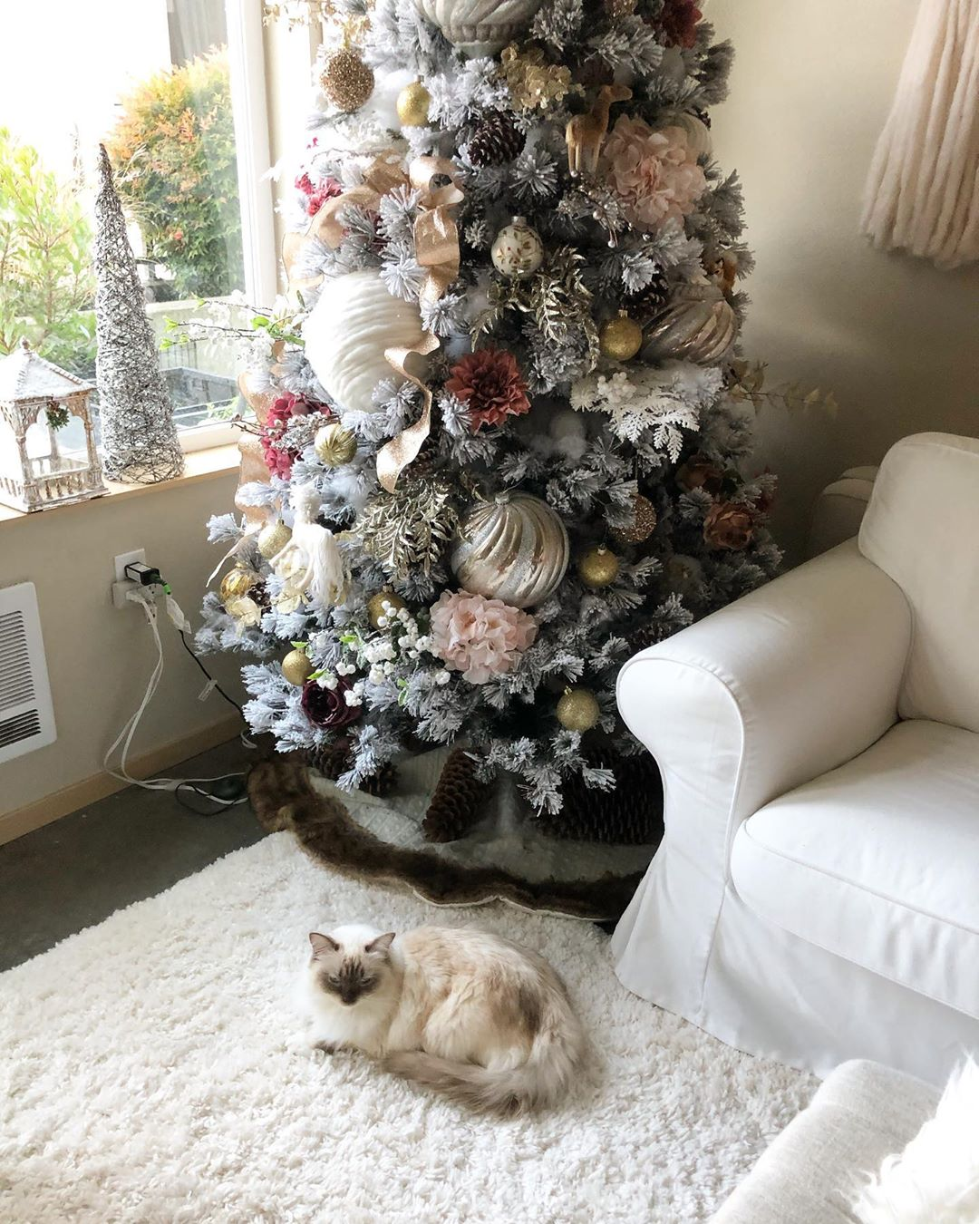 Cat and beautifully decorated Christmas tree