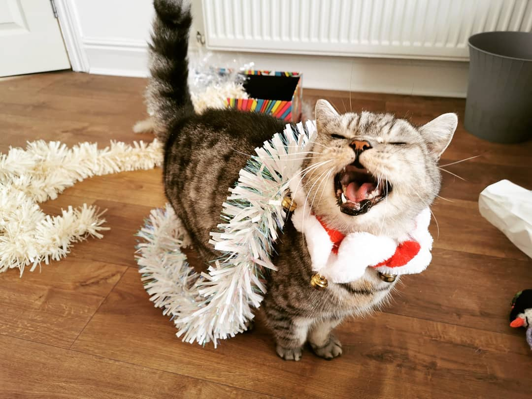 Funny Christmas cat is enjoying holidays