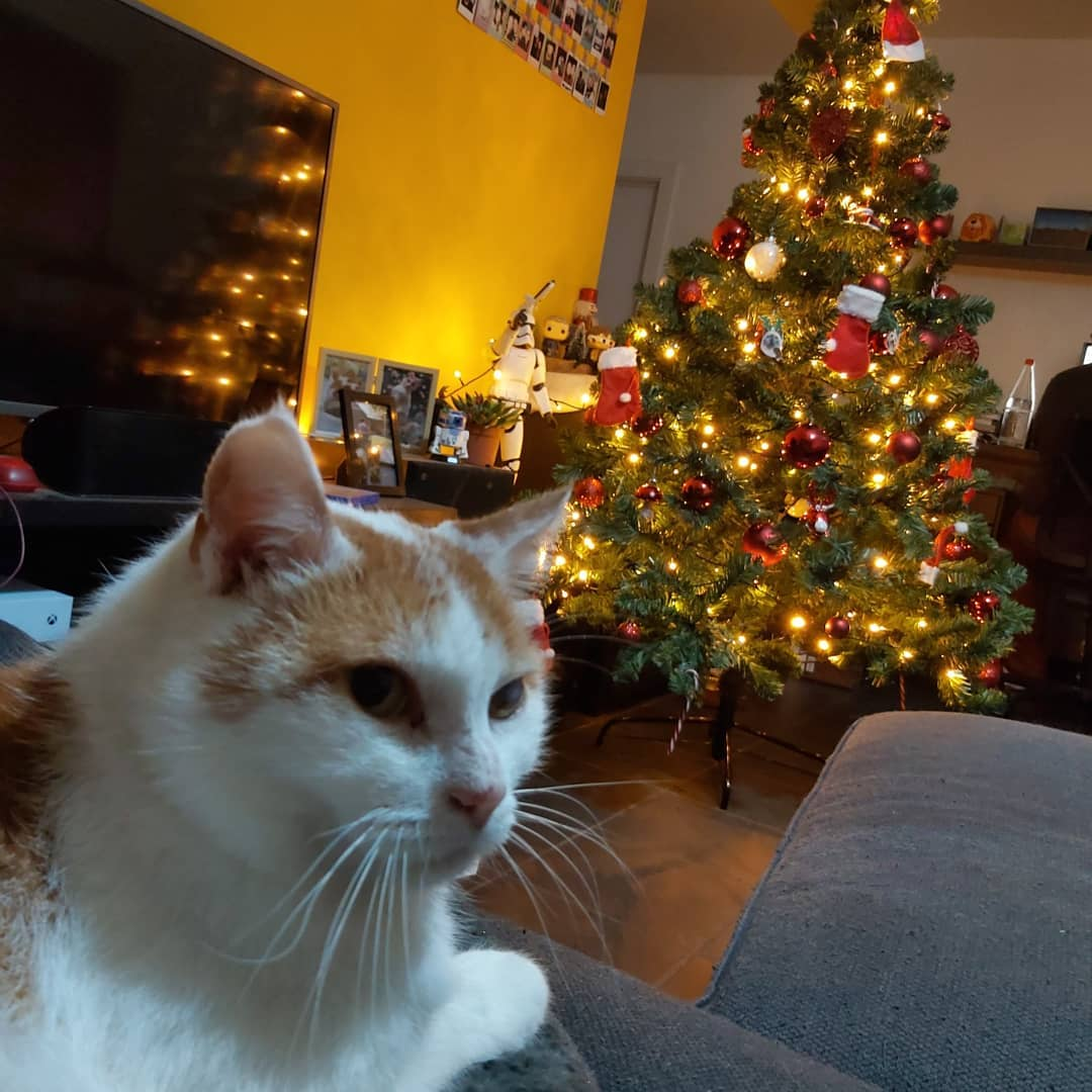 Cat + Christmas tree selfie