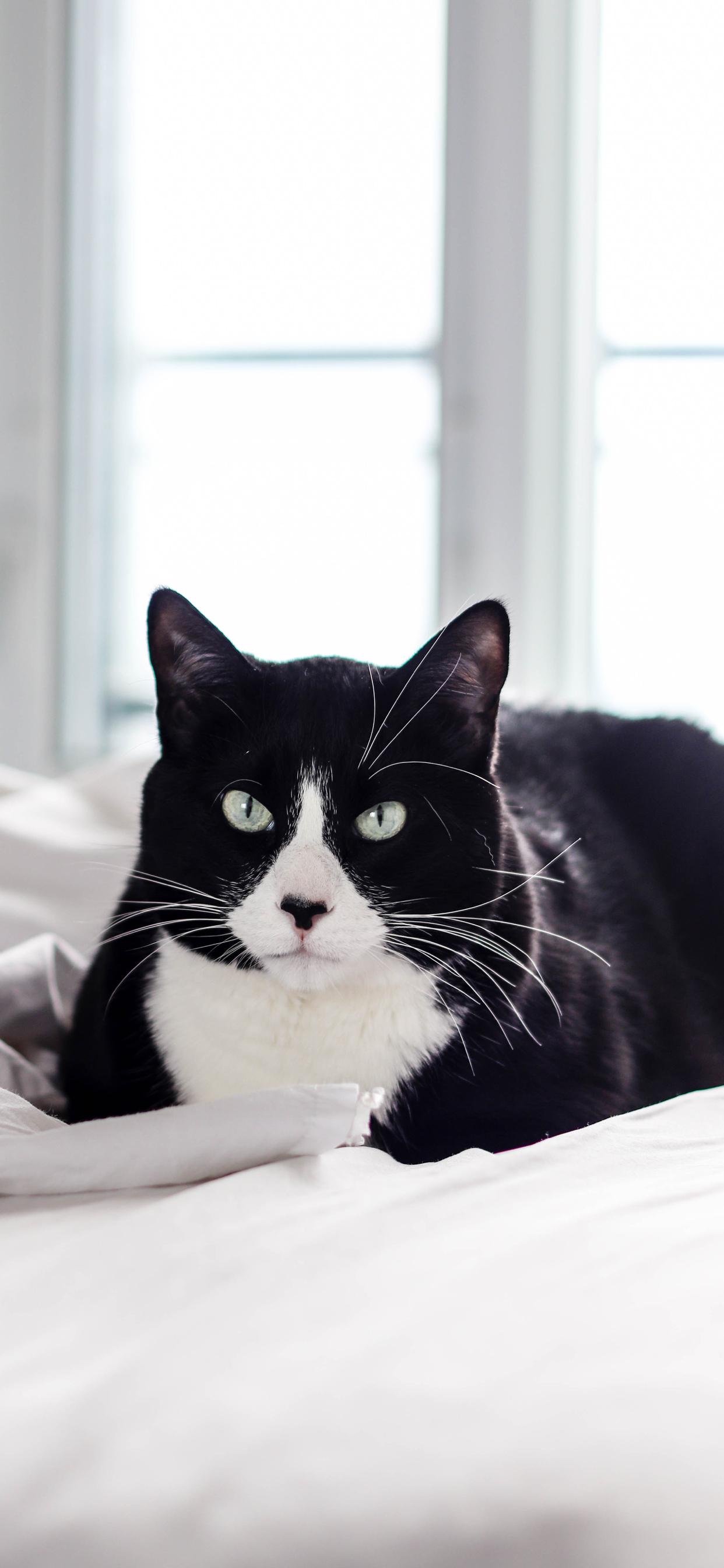 8 Cute Cat Iphone Wallpapers Cat T Shirt Store