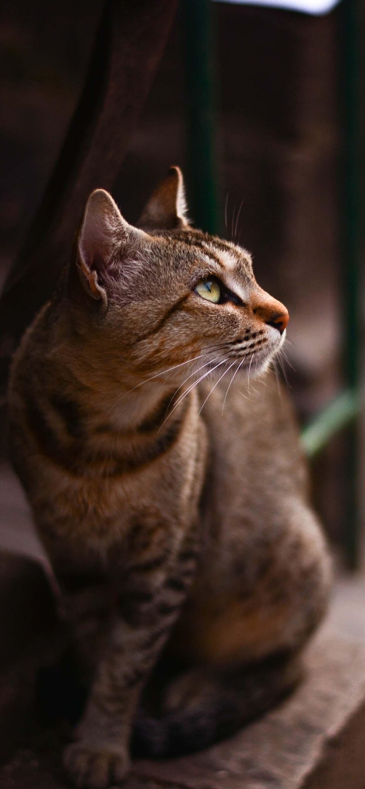 Stunning Beautiful Cat - iPhone Wallpaper