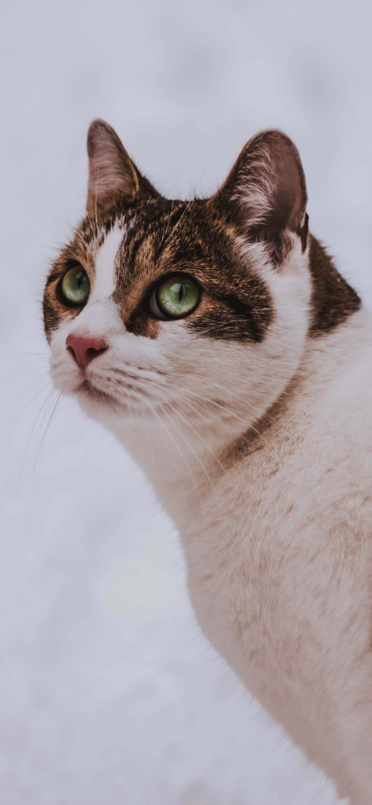Beautiful Cat Portrait - iPhone Wallpaper