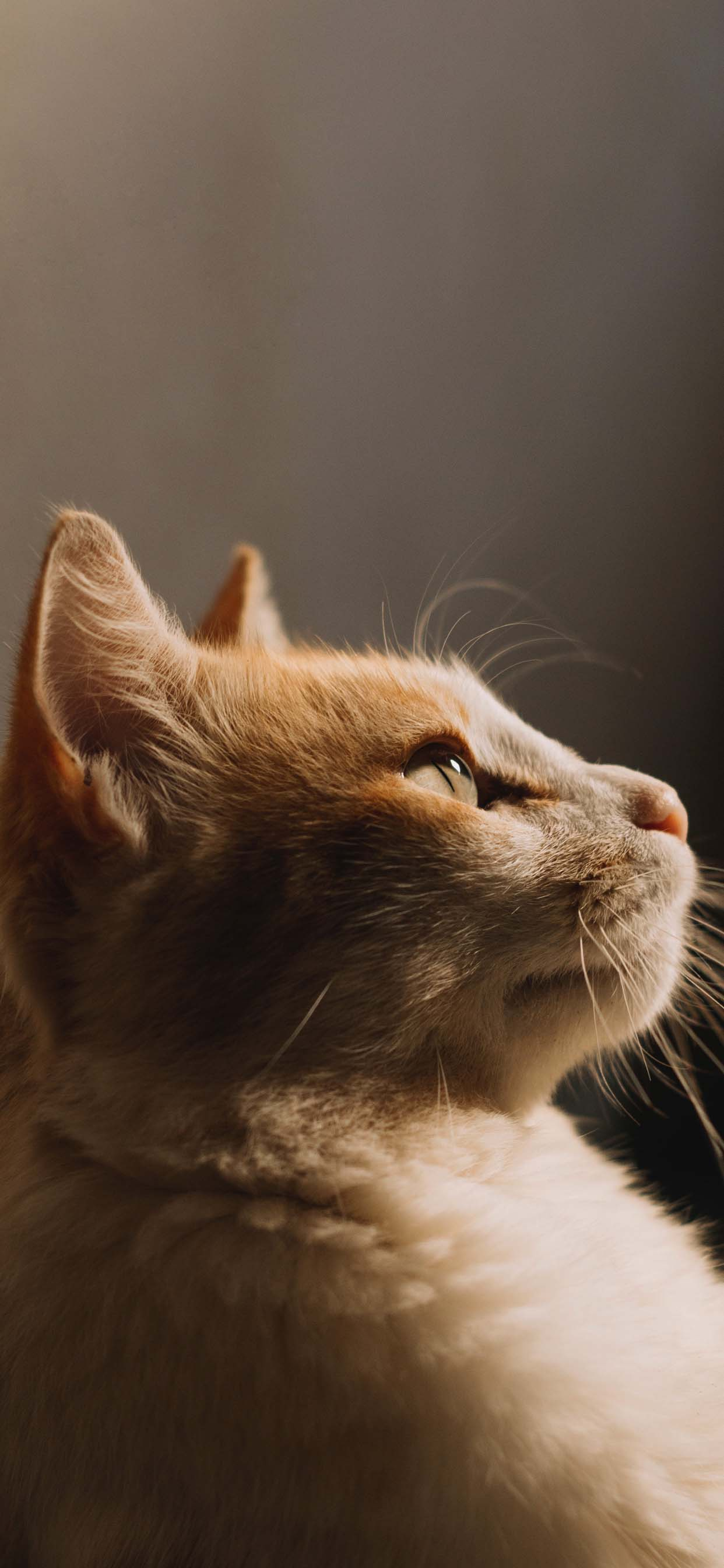 Beautiful Cat Face Portrait iPhone Wallpaper
