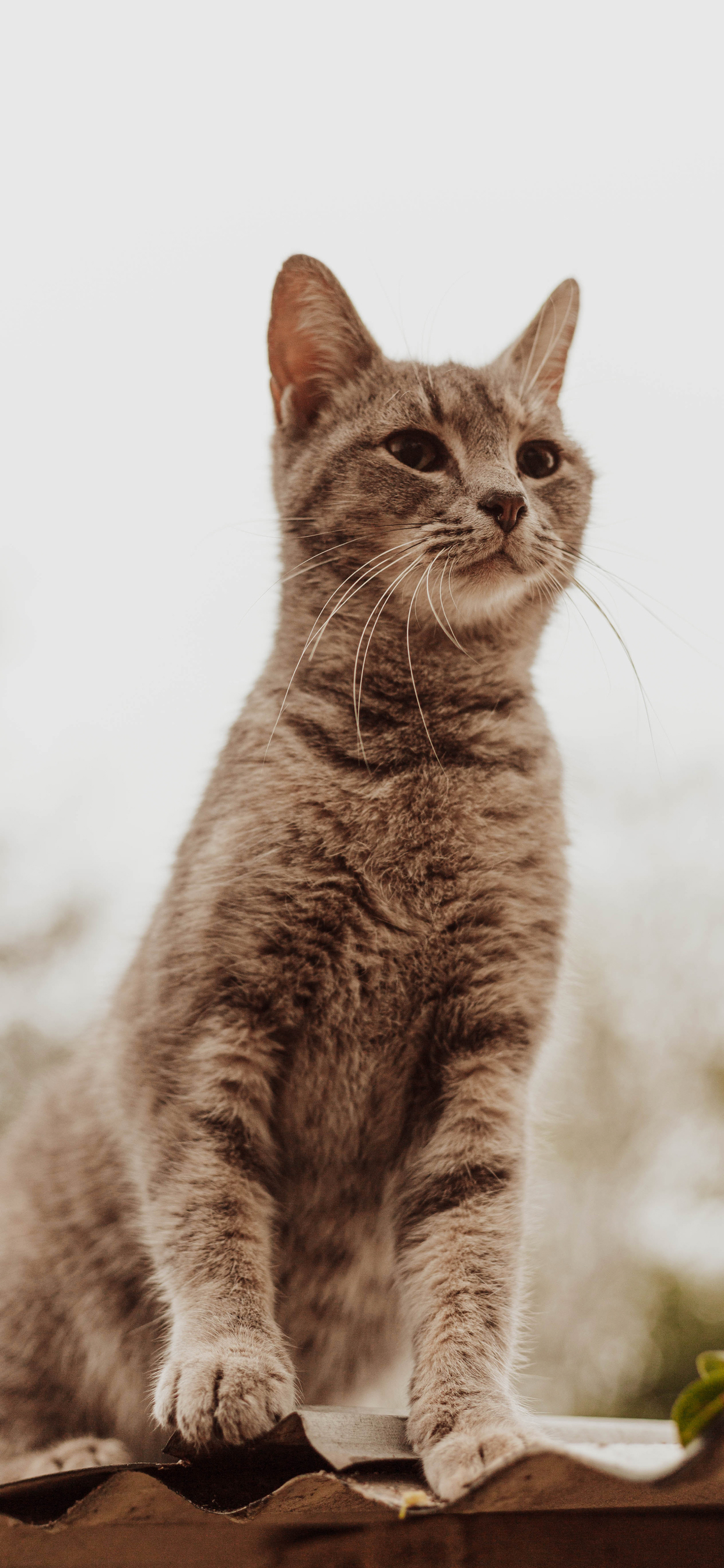 10 Beautiful Cat Wallpapers For Your Iphone 11 Women S Cat T Shirts I Like Cats Very Much