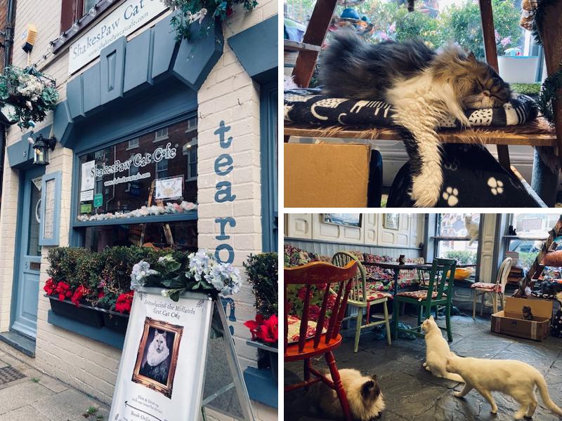 Shakespaw Cat Cafe