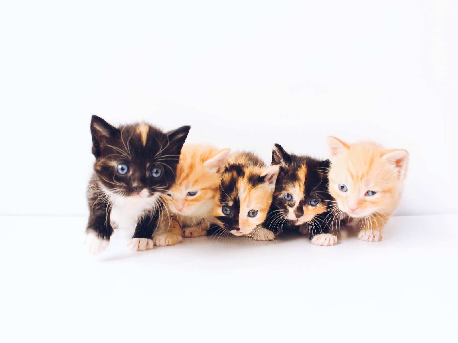 5 Beautiful Kittens on white background