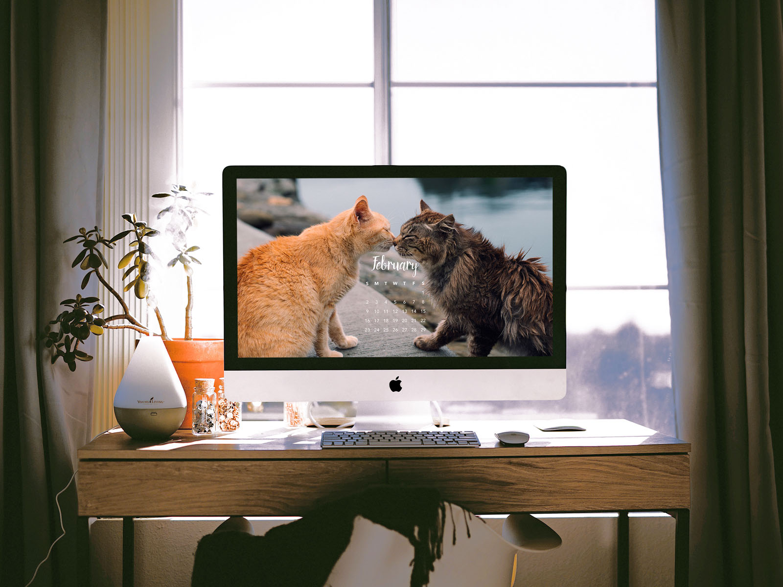 iMac with Cat Wallpaper
