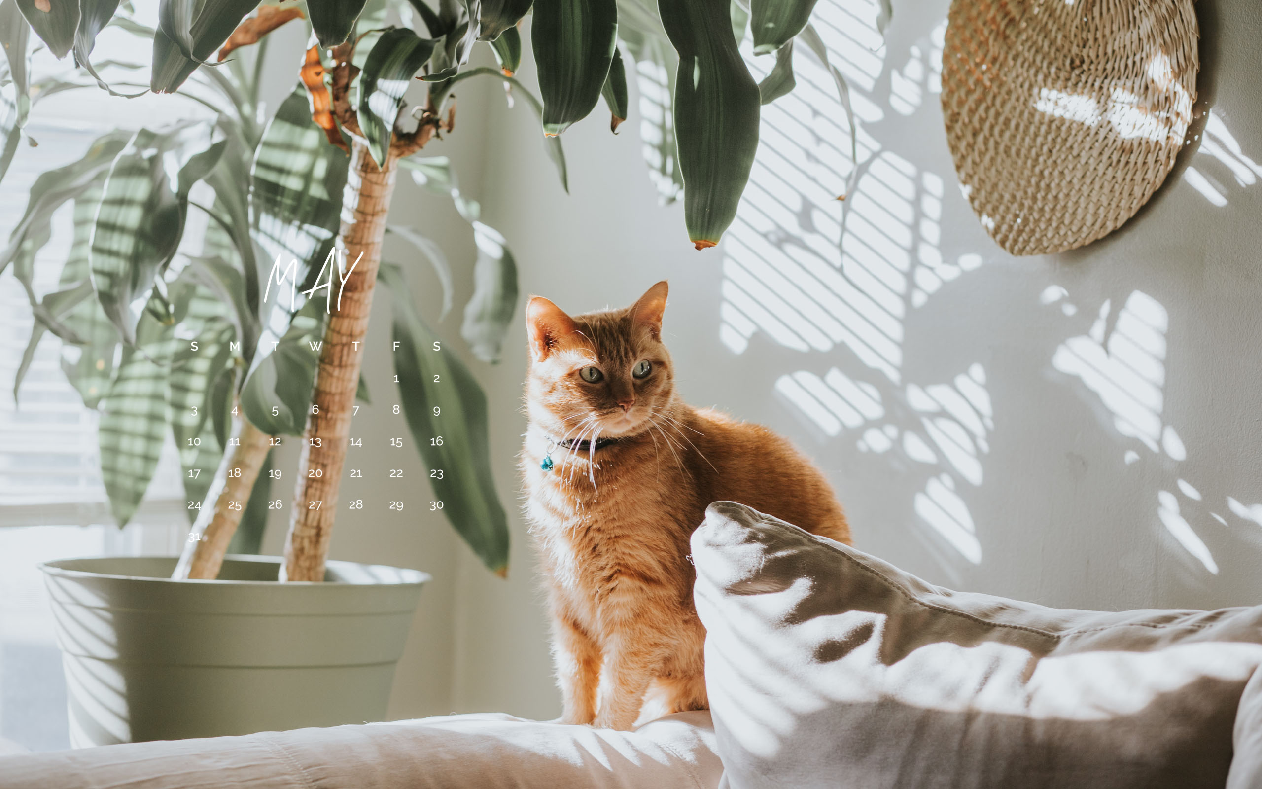 Cat Calendar Wallpaper May 2020