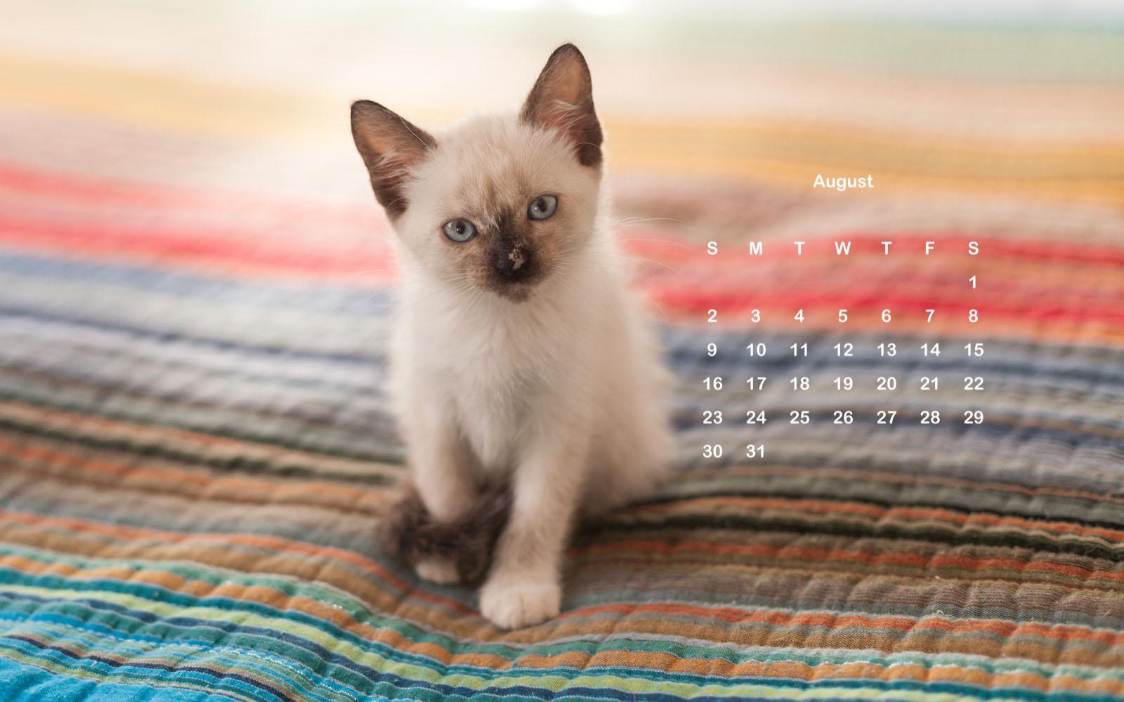Cute Cat August 2020 Wallpaper