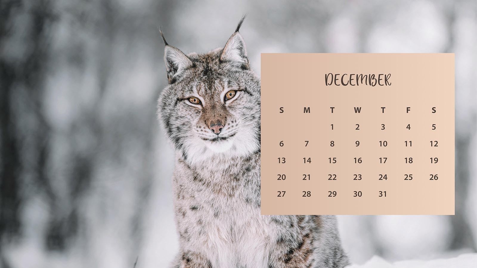 Winter Cat December 2020 Calendar